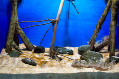 Aquarium de poissons Photo libre de droits