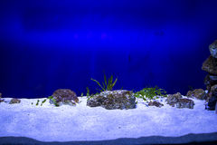 Aquarium de poissons Images libres de droits