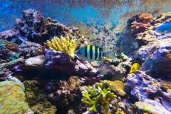 Aquarium de récif Photographie stock libre de droits