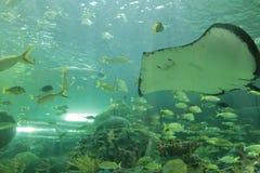 Aquarium de Ripley, Toronto, Canada fotografia stock libera da diritti