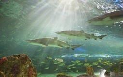 Aquarium de Ripleys à Toronto Images stock
