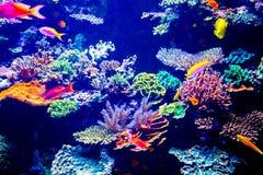 Aquarium de Singapour Photos libres de droits