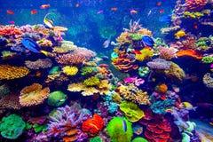 Aquarium de Singapour Photo stock