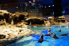 Aquarium de Sumida dans la ville de Tokyo Skytree Un bon nombre de pingouins mignons image libre de droits