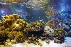 Aquarium de Toba Image stock