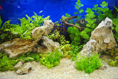Aquarium decoration Royalty Free Stock Photos