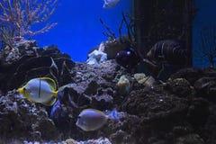 The aquarium at the Dehiwala zoo. Colombo, Sri Lanka. Saltwater fish. The aquarium at the Dehiwala zoo. Colombo, Sri Lanka. 2018 Royalty Free Stock Photos