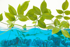 Aquarium-Dekor Stockfoto