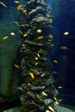Aquarium with different colorful fishes swimming Stock Photo