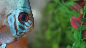 Aquarium with Discus Royalty Free Stock Photos