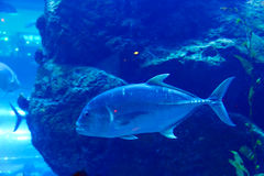 Aquarium in Doubai Stock Fotografie