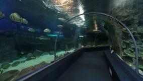 Aquarium du monde de découverte de Sotchi banque de vidéos