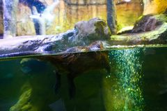 Aquarium Dubai Stockbilder