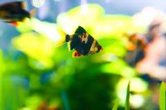 Aquarium Dubai Lizenzfreies Stockfoto