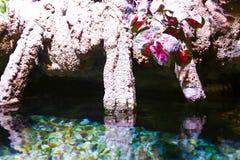 Aquarium Dubai Lizenzfreie Stockbilder