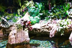 Aquarium Dubai Lizenzfreie Stockfotos