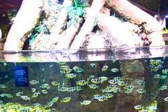 Aquarium Dubai Stockbild