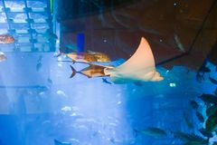 Aquarium Dubai Lizenzfreies Stockbild