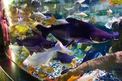 Aquarium Dubai lizenzfreie stockfotografie