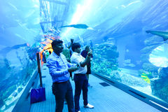 Aquarium Dubai Royalty Free Stock Photo