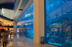 Aquarium in Dubai-Mall, Dubai, Vereinigte Arabische Emirate Lizenzfreie Stockfotos