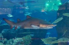 Aquarium in Dubai-Mall, Dubai, Vereinigte Arabische Emirate Lizenzfreie Stockbilder