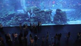 Aquarium dubai mall Royalty Free Stock Images