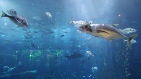 Aquarium dubai mall Stock Images