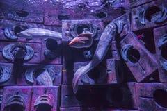 Aquarium in Dubai Mall Royalty Free Stock Photography