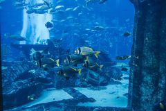 Aquarium in Dubai Mall Stock Photography