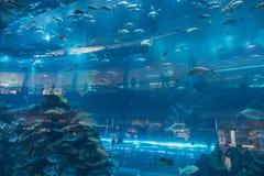 Aquarium in Dubai Mall Royalty Free Stock Photo