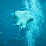 Aquarium in Dubai Mall Royalty Free Stock Images