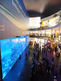 Aquarium at Dubai Mall in the UAE Stock Photography