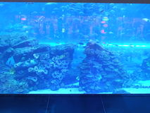 Aquarium at Dubai Mall in the UAE Royalty Free Stock Photo