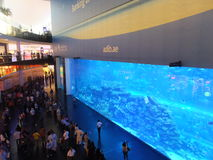 Aquarium at Dubai Mall in the UAE Royalty Free Stock Image