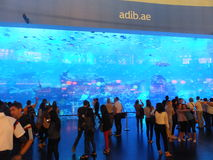 Aquarium at Dubai Mall in the UAE Stock Image