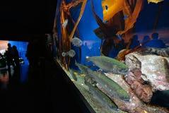 Aquarium en publiek stock afbeelding