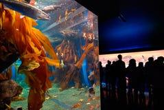 Aquarium en publiek royalty-vrije stock foto