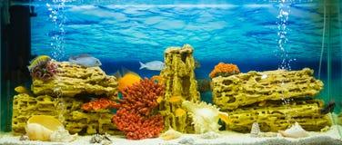 Aquarium with exotic fish (Аквариум с экзотиче. Photo of exotic fish in home aquarium Stock Photo