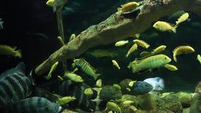 Aquarium with exotic fish stock footage