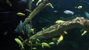 Aquarium with exotic fish stock video footage