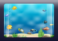 Aquarium with exotic fish. An aquarium with exotic marine fish. Clear glass. Vector graphics Royalty Free Stock Images