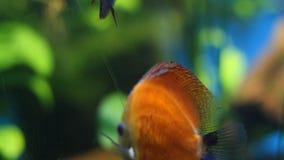Aquarium stock footage