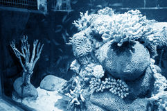 Aquarium Exotic and Tropical Royalty Free Stock Photography