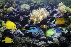 Aquarium Exotic and Tropical Royalty Free Stock Photos