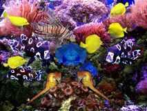 Aquarium Exotic and Tropical Royalty Free Stock Images