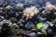 Aquarium Exotic and Tropical with anemone Royalty Free Stock Photos
