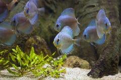 Aquarium exotique et tropical avec des poissons Photos libres de droits