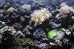 Aquarium exotisch und tropisch mit Anemone lizenzfreie stockfotos