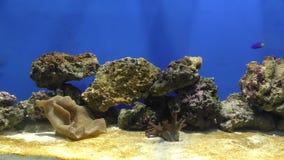 Aquarium Exotische Fische im stock video